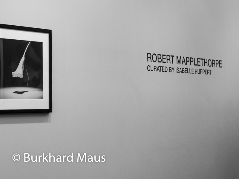Robert Mapplethorpe (détail), Galerie Thaddaeus Ropac, Paris Photo, Grand Palais, Paris
