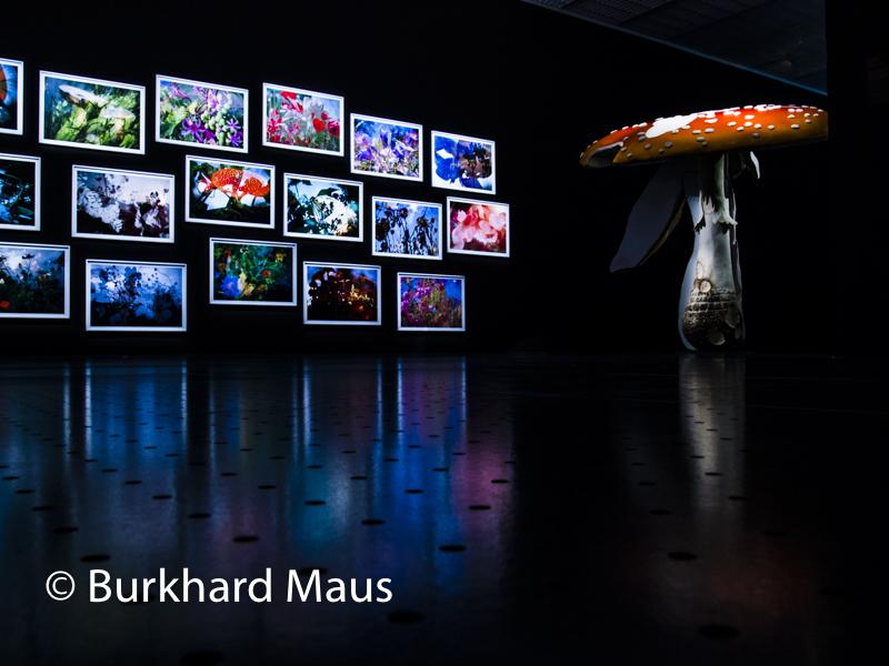 "Peter Fischli et David Weiss, (diverse) (détal), (l.), Carsten Höller, ""Giant Triple Mushroom Amanita muscaria / Helvella crispa / Boletus badius"", (r.), Centre Pompidou-Metz"