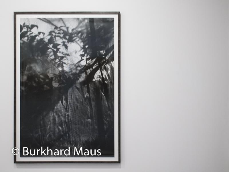 Berit Schneidereit, Nouvell Photographie de Düsseldorf, RX Galerie, Paris