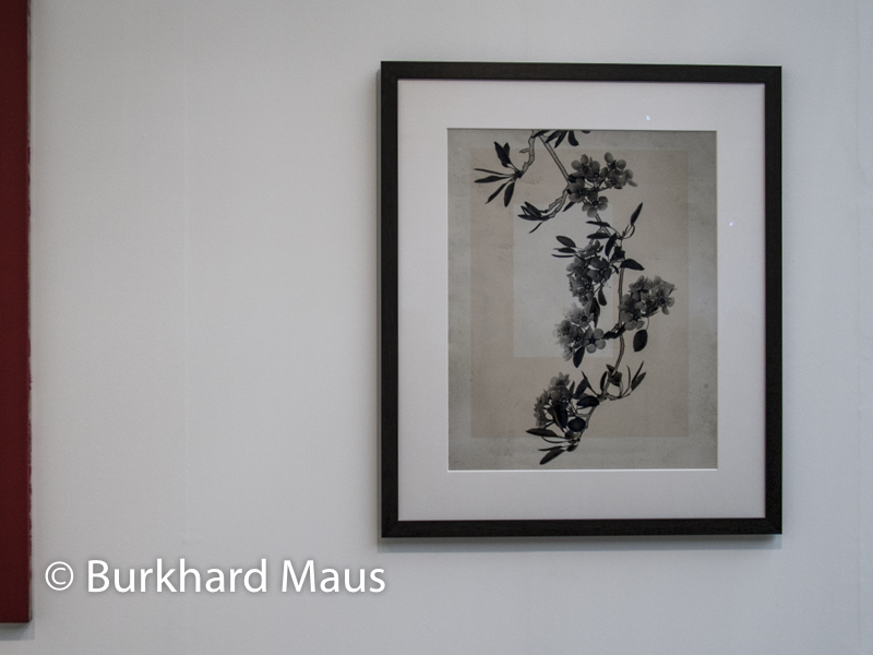 "Thomas Ruff, ""flowers_13"", Konrad Fischer Galerie, Foire Internationale d'Art Contemporain (FIAC) 2019"